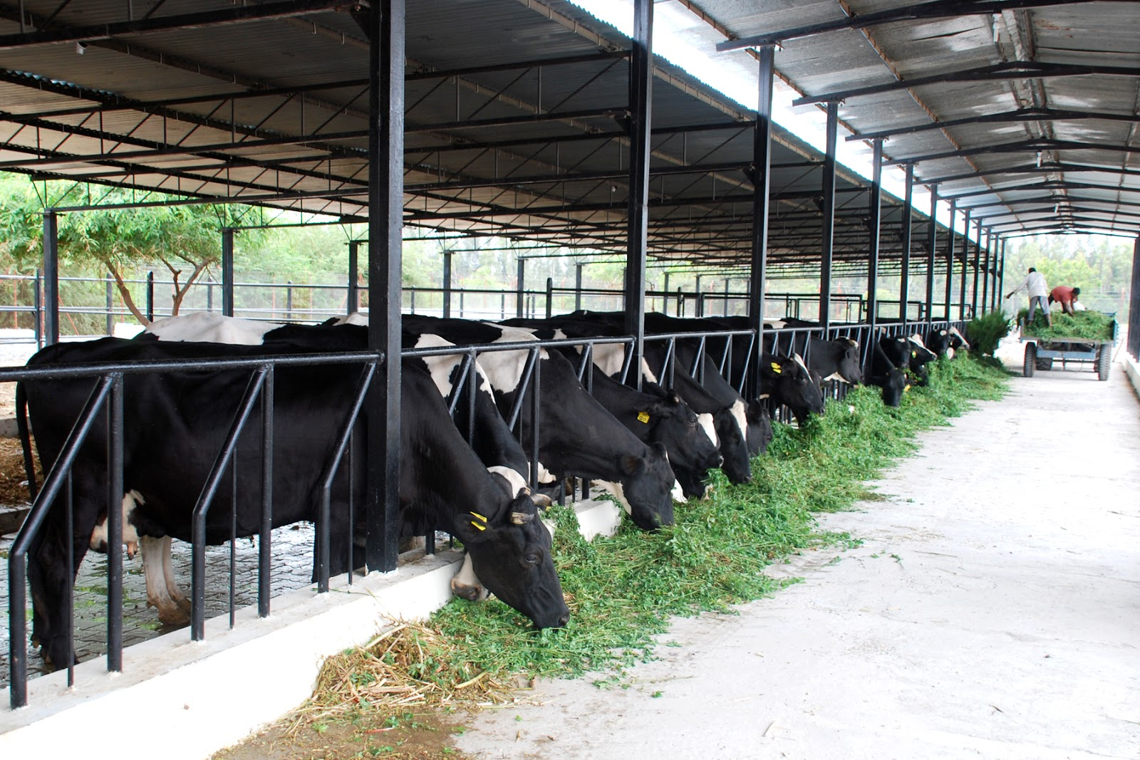 Dairy farming business plan in pakistan pharmacology
